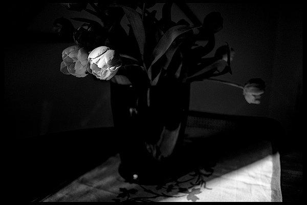 Tulipani bagnati da un fascio di luce
